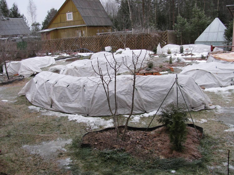 Как укрыть розы на зиму на урале пошаговые фото